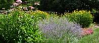 Perennial Landscape