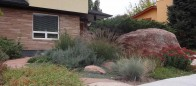 Boulder Residence Xeriscape